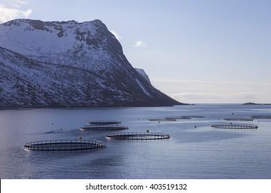 Fish,salmon farms in northern Norway. Senja