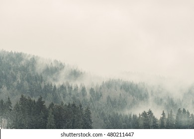 Fit-tree evergreen mountain forest covered in fog mist. Epic mountain scene.  Travel inspiration. Vacation wallpaper.. Postcard concept. Vintage effect.