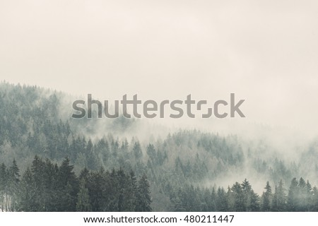 Fittree Evergreen Mountain Forest Covered Fog Foto De Stock