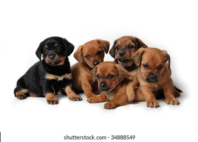 Five adorable puppies isolated on white