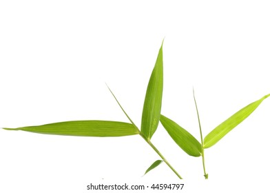 Five bamboo leaves on a twig