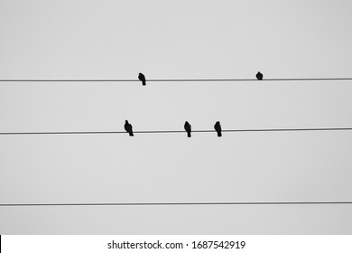 Five beating birds on electric wires