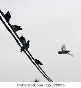 Five birds sit on a wire, one bird is flying away from them.
