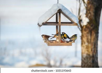 Five birds in the snowy winter bird feeder eating pork fat
