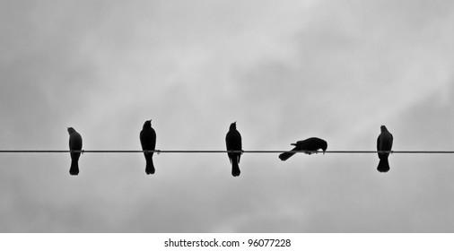 Five Brewer's Blackbirds On A Wire.