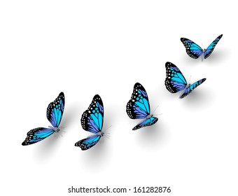 Five butterflies isolated on white. 3d illustration