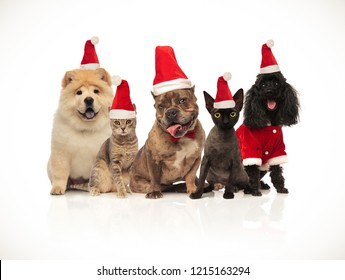 five cats and dogs of different breeds wearing santa hats sitting on white background while panting