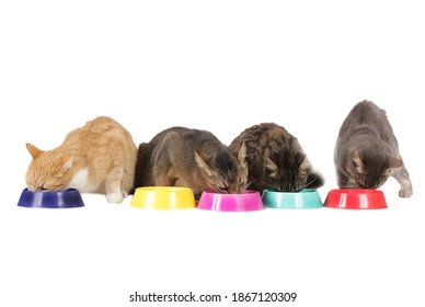 Five cats eating from food bowls isolated on white
