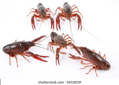 five crawfish