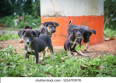 Five cute black puppies in the lawn.