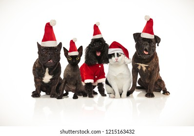 five cute santa cats and dogs of different breeds sitting on white background and panting