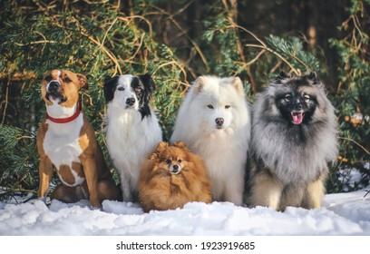 Five different breeds in one picture