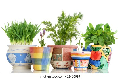 Five different herbs in colorful pots isolated on white