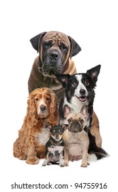 Five dogs in front of a white background