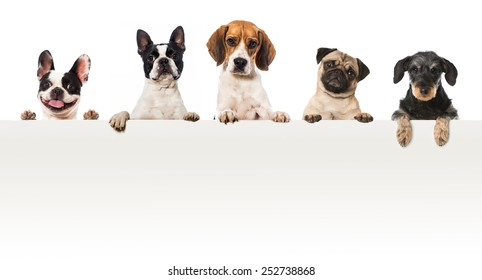 Five dogs looking over a wall