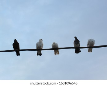 five doves perching on electric cable with sky background
