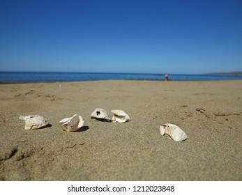 Five eggs of Loggerhead turtle on the beach on Cyprus