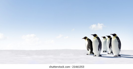 Five emperor Penguins