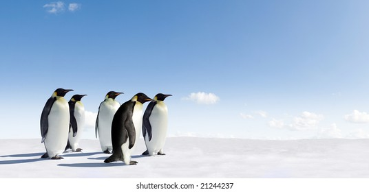 Five Emperor Penguins in Antarctica