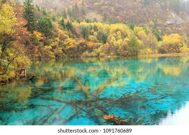 Five Flower Lake in Jiuzhaigou National park,fallen trees are scattered on the bottom of lake, at China.