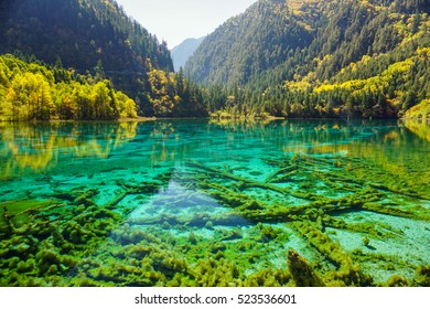 Five Flower Lake,  Jiuzhaigou, Sichuan, China  UNESCO World Heritage (Natural) There are many ancient trunk at bottom of the lake.