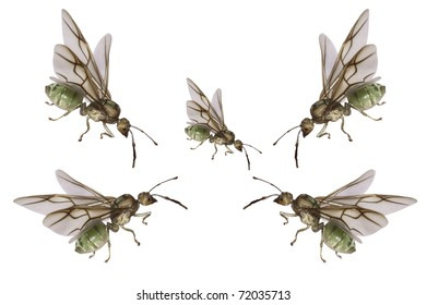 five green ants