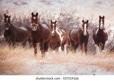 five horses in the snow-covered hills