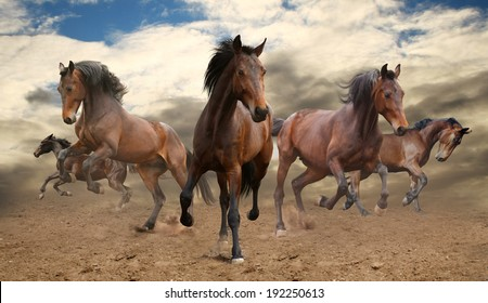 five indomitable bay horse galloping