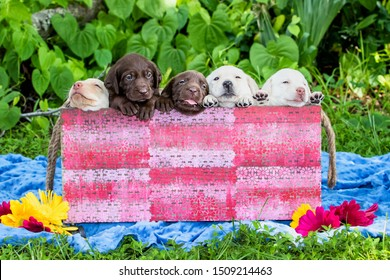 five labrador puppies in crate at park