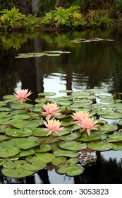 Five large beautiful pink water lilies in full bloom, surrounded by a blanket of green lily pads in a dark pond. Vertical orientation. Room for text.