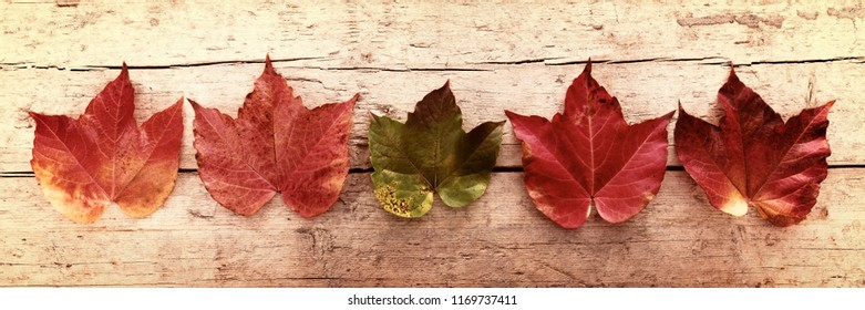 five leaves in a autumn panorama, vintage filtered