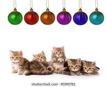 Five little kittens for present
