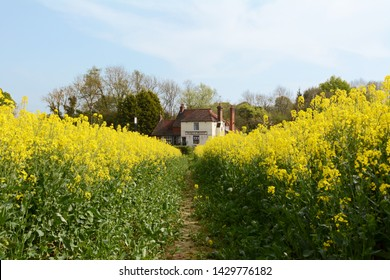 FIVE OAK GREEN, ENGLAND - APRIL 22, 2019: View of the George and Dragon pub in Kent, along a footpath through a field of yellow rapeseed. English flag bunting festoons the front of the public house.
