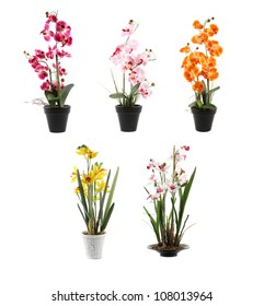 five orchids on pots
