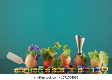 Five organic seedling plants in eggshells on turquoise background, eco gardening. Horizontal. - Shutterstock ID 1071704018