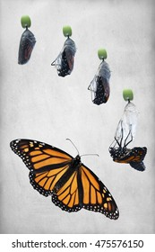 Five photos showing the birthing process of a newborn butterfly. Stages from right before the chrysalis hatches to full open winged butterfly. Vintage, textured, vertical background, copy space.