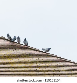 Five pigeons sit on the roof of a house.
