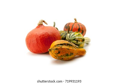 Five pumpkins on a white background