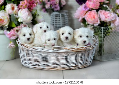 five puppies in a basket, pink flowers, a lapel