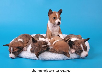 five puppies lie on a white rug on a blue background someone is sleeping someone woke up