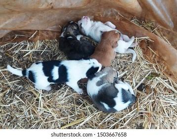 five puppies on the floor