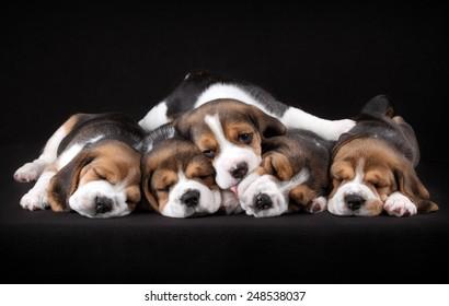 Five puppies sleeping