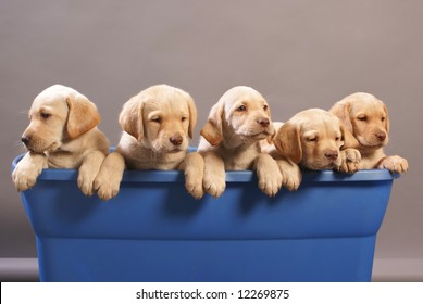 five puppies in a tub