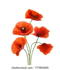 Five red poppies isolated on white background.