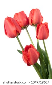 Five red tulips isolated on a white background