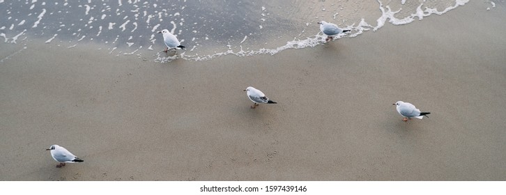 Five Seagulls on the Baltic Sea. Banner.