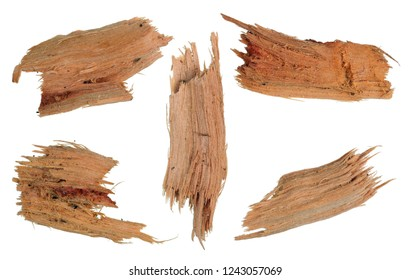 Five small pieces of rotten broken yellow maple wood. Isolated on white macro set
