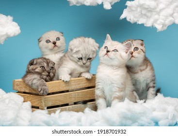 Five small striped Scottish kittens of different colors sit on a blue background and look with great interest at the white cotton clouds. Funny animals concept.