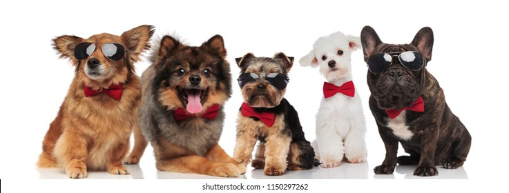 five stylish dogs of different breeds wearing red bowties while standing, sitting and lying on white background