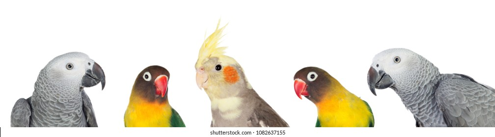Five tropical birds isolated on a white background